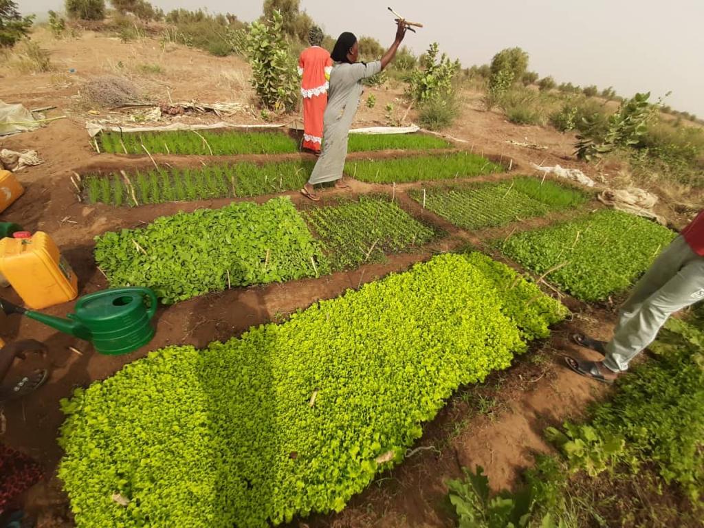 Des femmes qui exploitent la terre en Assaba