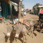 Photos des jeunes charretiers à Kankossa
